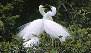 White Heron Tour